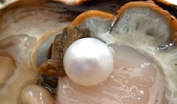 PEARL-DIVING